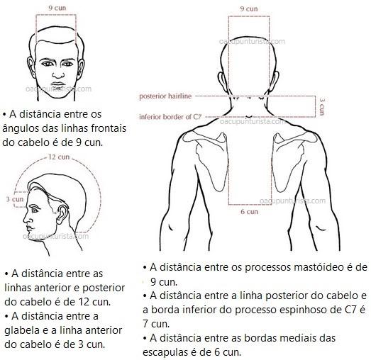 Partes da cabeça 1