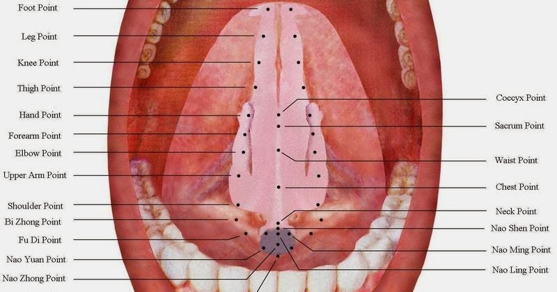 Microssistema da Lígua –ShéZhen