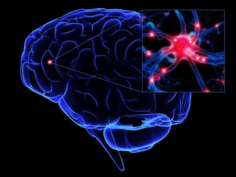 cerebroneuronio